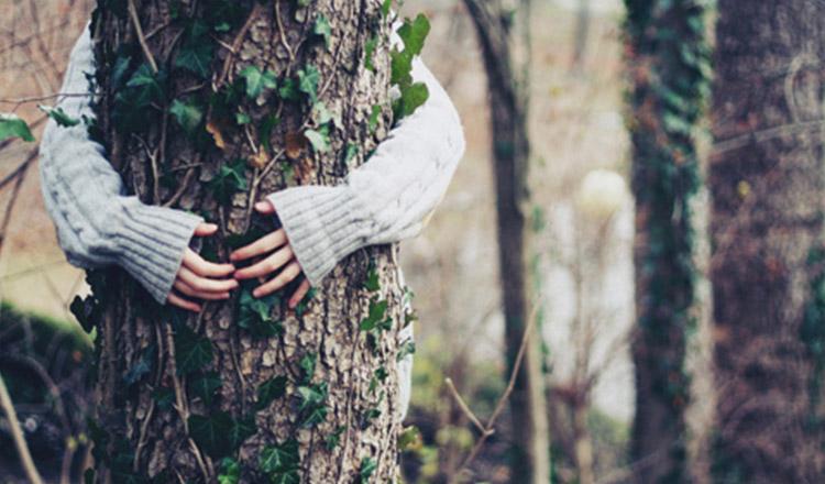 Copacii au energie terapeutică și te pot trata de numeroase boli, îmbrățișează-i!