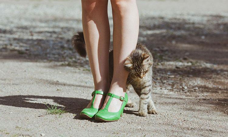 pisicile umbla printre picioarele oamenilor